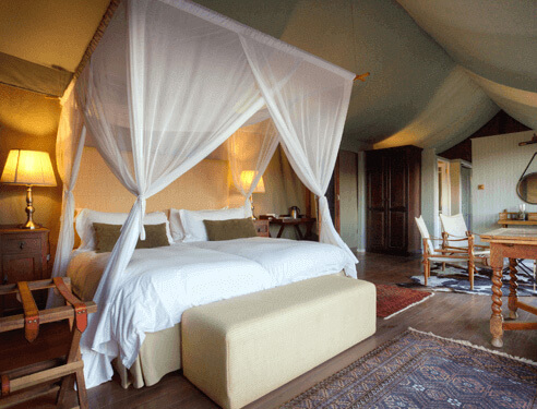 Camp FigTree, Mountain Safari Lodge, Addo Accommodation