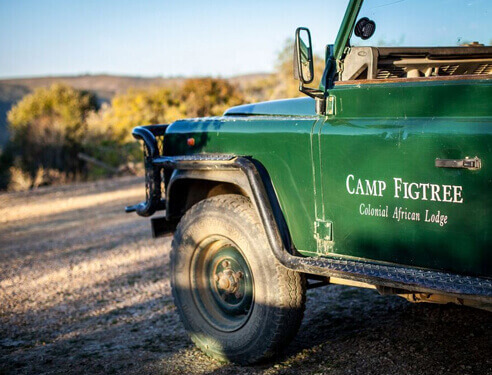 Camp FigTree, Mountain Safari Lodge, Addo Activities